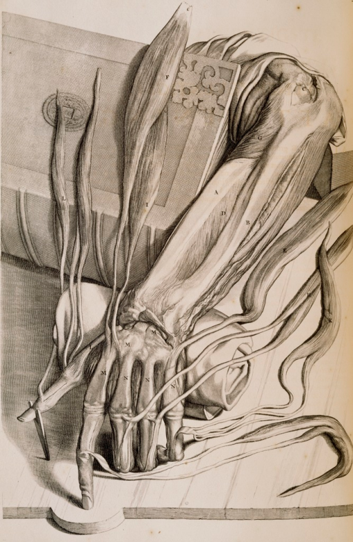 <p>An arm extends from an opened folio book; the skin is flayed and exposed muscles and bones.</p>
