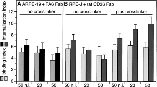 Inhibition but not stimulation of OS internalization by monovalent Fab fractions of CD36 Abs. 5 h of challenge with FITC-OS of human (A) and rat (B) RPE was followed by fluorescence scanning to calculate binding and internalization indices as described in Fig. 2. Light bars represent the binding index, dark bars the internalization index for each condition. Values in A and B represent averages ± SD of three independent experiments. (A) The presence of Fab fractions of FA6–152 IgG at 20 and 50 μg/ml, marked 20 and 50, respectively, did not significantly alter the amount of OS bound or internalized by ARPE-19 cells. Control cells received Fab fragments of nonimmune IgG at 50 μg/ml. (B) Fab fractions of rat CD36 IgG at 50 μg/ml, marked 50, decreased the OS internalization index of rat RPE-J cells to 54% of the index of cell receiving preimmune Fab fractions (Student's t test P < 0.005). Changes in bound OS were not significant. Cross-linking of CD36 Fab at 20 and 50 μg/ml, marked 20 and 50, using goat anti–rabbit Fab IgG at 10 μg/ml reversed the effect of CD36 Fab alone. Using Student's t test, these changes were significant with P < 0.005. n.i., nonimmune.