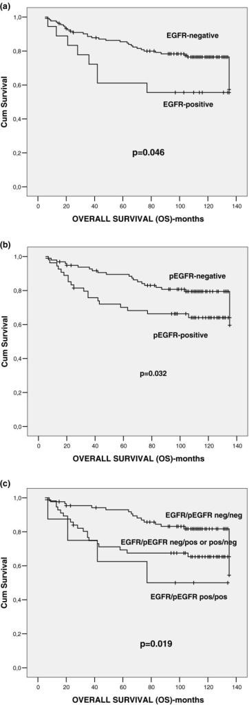Univariate analysis (log-rank test) of overall survival. Schematic representation of the impact of (a) EGFR, (b) pEGFR and (c) EGFR/pEGFR expression on overall survival (OS). EGFR, epidermal growth factor receptor; pEGFR, phosphorylated epidermal growth factor receptor.