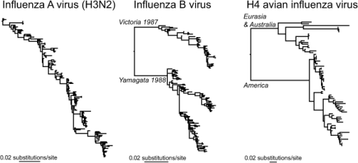 phylodynamic patterns of human and avian influenza viru