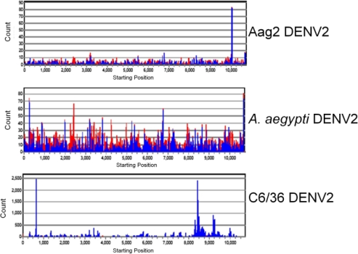 viRNA genome coverage distribution varies among DENV2-infected Aag2 and C6/36 cell cultures and Aedes aegypti mosquitoes.viRNA coverage across DENV genome for each library. Shown are Aag2 (5 dpi) library, C6/36 (5 dpi) library, A. aegypti (9 dpi) library. Red bars, negative-sense viRNAs; blue bars, positive-sense viRNAs. Note differences in Y-axes among graphs.