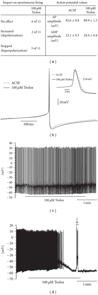 Impact of Trolox treatment on pacemaker activity in LC neurons. (a) Table demonstrating the effect of 100 μM Trolox on the spontaneous firing of LC neurons and comparison of values obtained for action potentials (APs) before (ACSF) and 180 s after 100 μM Trolox treatment (n = 11 for spontaneous firing and n = 23 for AP comparison). (b) Comparison of the waveshape of averaged APs before (ACSF) and 180 s after application of 100 μM Trolox in ACSF (n = 23). Hyperpolarizing group was excluded from comparison demonstrated in a and b due to lack of APs at 180 s treatment. (c) and (d) Recordings demonstrating opposite effects induced by 100 μM Trolox which in a small number of cases depolarized neurons and increased firing (c) or hyperpolarized neurons which led to abolition of AP firing (d) (n = 11). AP firing recommenced in response to depolarization induced by current injection (d, Arrow).