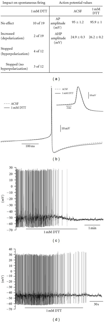 Impact of DTT treatment in the pacemaker process of LC neurons. (a) Table demonstrating the effect of 1 mM DTT in the spontaneous firing of LC neurons and comparison of values obtained for AP before (ACSF) and 180 s after 1 mM DTT treatment (n = 19 for spontaneous firing and n = 28 for AP comparison). (b) Averaged APs demonstrating comparison before (ACSF) and after 180 s after 1 mM DDT treatment (n = 28). Hyperpolarizing group was excluded from comparison demonstrated in (a) and (b) due to lack of APs at 180 s treatment. (c) and (d), Example for recordings demonstrating the two minor effects induced by 1 mM DTT where neurons hyperpolarized and ceased firing (c) and stopped firing without hyperpolarization (d) (n = 19).