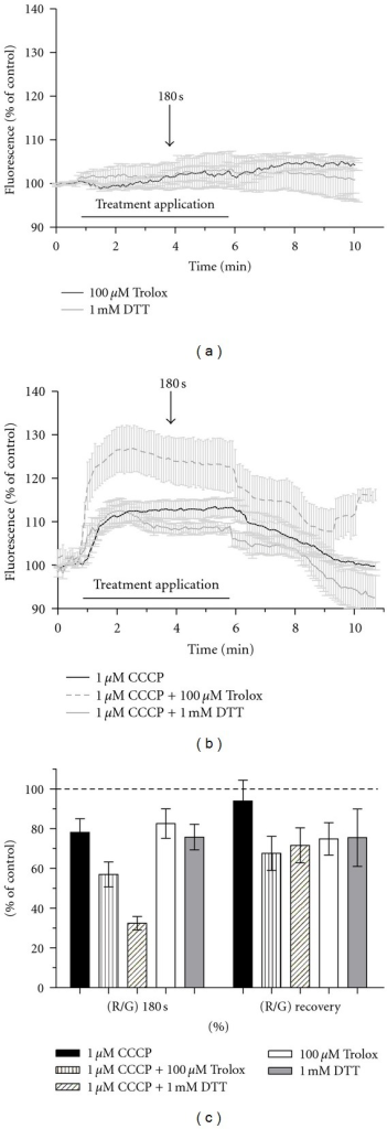 Effect of Trolox and DTT treatment in [Ca2+]c and Ψm in control and impaired conditions. (a) Graph demonstrating that both antioxidants did not impact on [Ca2+]c in control conditions (n = 5 for both). (b) Graph demonstrating that 100 μM Trolox co-treatment with 1 μM CCCP increased [Ca2+]c and 1 mM DDT did not effect the normal CCCP-induced increase in [Ca2+]c (n = 6 for Trolox n = 5 for DTT cotreatments, and n = 7 for CCCP by itself). (c) JC-1 fluorescence demonstrating the impact of Trolox and DTT in Ψm in control and impaired (1 μM CCCP cotreatment) conditions (n = 8 for Trolox and n = 9 for DTT by themselves; n = 12 for Trolox and n = 10 for DTT cotreatments; n = 9 for CCCP by itself). All graphs show mean ± SEM.
