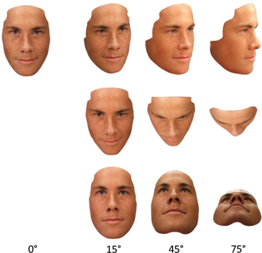 Example of a set of the face stimuli  Views are taken f | Open-i
