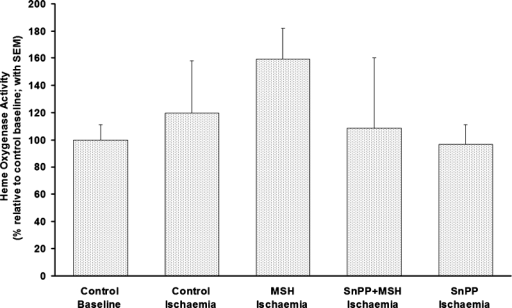 Relative HO activities in ocular tissue from eyes harvested in part II experiments (group II). Results are shown for five groups including: nonischemic retinas from vehicle-treated rats (Control Baseline) and I/R-injured retinas from vehicle- (Control Ischemia), α-MSH- (MSH Ischemia), SnPP + α-MSH- (SnPP + MSH Ischemia), and SnPP-treated rats (SnPP Ischemia). Activity of the enzyme in ocular tissue of an aforementioned group is shown as percentage of bilirubin production by a particular group relative to control baseline eye values with SEM