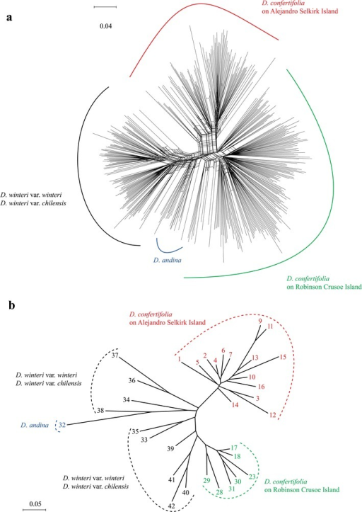 Genetic relationships among populations of Drimys. SplitsTree NeighbourNet (phylogenetic network) of AFLP data showing relationships among individuals of D. andina, D. confertifolia, D. winteri var. chilensis and D. winteri var. andina (a), and Neighbour-Joining tree based on microsatellites showing relationships among populations in the same species of Drimys (b)