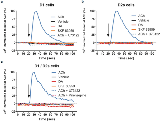 Neither DA nor SKF 83959 induces calcium mobilization in stable cell lines expressing D1 and/or D2 receptors. Using the FLIPR5 calcium assay system, intracellular calcium levels were measured every 2 seconds and plotted against time. Ligands (ACh = 10 µM acetylcholine, vehicle, DA = 10 µM dopamine, 10 µM SKF83959, 10 µM U73122, or 10 µM pirenzepine) were added at 20 secs, indicated by an arrow, in (a) D1R, (b) D2R, and (c) D1R/D2R stable cells. Calcium level is shown in percentage normalized to 10 µM acetylcholine (ACh). Traces are representatives of n = 3 experiments.