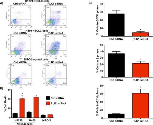 Effect of PLK1 knockdown using siRNA on NSCLC cell death and cell cycle progression(A & B) Representative flow cytometry plots of annexin V staining in NSCLC cells (H1299, H460) and a graph showing an increase in the percentage of cells which stained positive with annexin V, 72h post-transfection with PLK1 siRNA (100 nM) complexed to lipofectamine 2000 (L2K). Cells treated with non-functional (Ctrl) siRNA served as controls. No difference in annexin V staining was observed in normal human lung fibroblasts (MRC-5), 72h post-transfection with PLK1 siRNA complexed to L2K when compared to controls (Ctrl siRNA), n = 3; bars, mean ± SE. **p < 0.01. (C) Cell cycle analysis shows a significant increase in G2/M cell cycle arrest in NSCLC cells, 48h post-treatment with PLK1 siRNA complexed to L2K. Cells treated with non-functional (Ctrl) siRNA served as controls, n = 3; bars, mean ± SE. **p < 0.01.