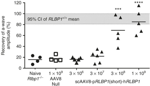 Dose–response relationship of a-wave recoveries in Rlbp1-/- mice treated with scAAV8-pRLBP1(short)-hRLBP1. Data points represent a-wave recoveries of individual mouse eyes (1 eye per mouse) assessed 12 or 13 weeks postsubretinal delivery of 3 × 106, 3 × 107, 3 × 108, or 1 × 109 vg/eye of scAAV8-pRLBP1(short)-hRLBP1 or 1 × 109 vg/eye of a  vector. The 95% confidence interval (CI) of the mean from several cohorts of Rlbp1+/+ mice is represented by the shaded region (n = 23 eyes). Calculations of p-values compare treated eyes to naive Rlbp1-/- eyes. ***P ≤ 0.001; ****P ≤ 0.0001.