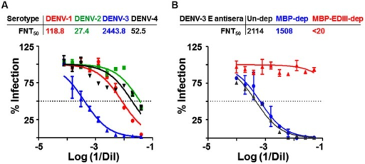 Characterization of neutralization potency of DENV-3 E VLP induced antibodies. (A) Two-fold serial dilutions of heat inactivated immune serum from DENV-3 E VLP-immunized mice was assessed for its potency to neutralize and inhibit the infectivity of DENV-1 (red), DENV-2 (green), DENV-3 (blue) and DENV-4 (black) using FACS-based neutralization assay. The y-axis corresponds to the observed percentage of virus infection in Vero cells. The dotted horizontal line represents 50% infection. The x-axis corresponds to logarithm of reciprocal serum dilution. (B) Effect of EDIII-specific antibody depletion on the DENV-3 virus neutralization potency of anti-DENV-3 E VLP antiserum. The same experiment as shown in panel A, except that the immune serum was pre-depleted with MBP alone (blue) or MBP-EDIII-3 fusion protein (red) before being assessed for its neutralization potency against DENV-3 infection. Control serum (gray) was analyzed in parallel without any pre-depletion with either MBP or MBP-EDIII-3 fusion protein.