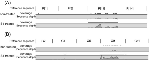 Mapping of RVA sequence reads of non-treated and S1 treated samples of calf No.1 andswine No.1 against bovine reference sequences of (A) VP4 and (B) swine reference of VP7.Positional sequence coverage and sequencing depth of VP4 (P[1], P[5], P[11] and P[14])and VP7 (G2, G4, G5, G9 and G11) of calf No.1 and swine No.1, based on referenceassembly to P[1]: NCDV Lincoln (AB119636), P[5]: WC3 (AY05071), P[11]: B223 (D13394),P[14]: RVA/Cow-wt/JPN/Tottori-SG/2013/G15P[14] (AB853893), G2:RVA/Vaccine/USA/RotaTeq-SC2-9/G2P7 [5] (GU565068), G4:RVA/Vaccine/USA/RotaTeq-BrB-9/1996/G4P7[5] (GU565090), G5:RVA/Pig-tc/ESP/OSU-C5111/2010/G5P[7] (KJ450849), G9: JP3-6 (AB176678) and G11: HLJhg7(JX498964).