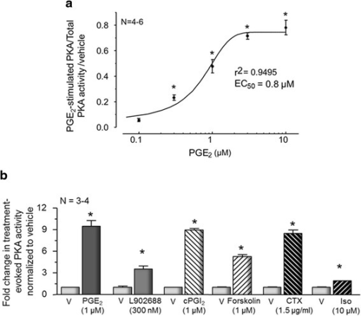 Prostaglandin E2 and other activators of cAMP production increase PKA activity in sensory neuronal cultures. a Each point represents mean ± SEM of PKA activity normalized to total PKA after 10-min exposure to various concentrations of PGE2 from 4 to 6 independent harvests of cells maintained in the absence of added NGF. Asterisks indicate a statistically significant increase in PKA activity compared to the vehicle-treated control using one-way ANOVA followed by Bonferroni's post hoc test. b Each column represents the mean ± SEM of PKA activity normalized to total PKA after a 10-min exposure to vehicle (V), PGE2, the EP4 receptor agonist, L902688, cPGI2, forskolin, CTX, or isoproterenol (Iso) as indicated. An asterisk indicates a statistically significant difference between PKA activation by each treatment compared to its respective vehicle control using Student's t test
