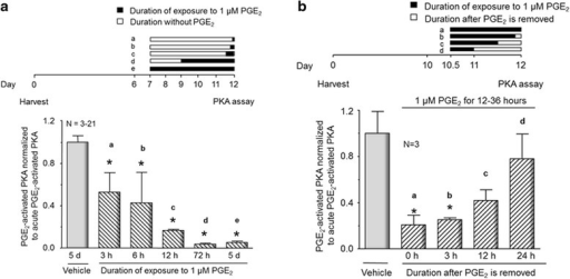 Time course of the onset and offset of desensitization of the PGE2-induced activation of PKA in sensory neuronal cultures after chronic exposure to the eicosanoid. Each column represents the mean ± SEM of PKA activity normalized to total PKA activity for various times of exposure to 1 μM PGE2 or after removal of 1 μM PGE2. a Cultures were pretreated with vehicle (open column) or 1 μM PGE2 (hatched columns) for the times indicated in the time line in the top portion of the figure. b Cultures were pretreated with vehicle (open column) or PGE2 (hatched columns) for the times indicated in the time line in the top portion of the figure, and then, the PGE2 is removed and cells assayed at the times indicated. An asterisk indicates a statistically significant difference between PGE2-treated sensory neuronal cultures and vehicle-treated cultures using one-way ANOVA followed by Bonferroni's post hoc test