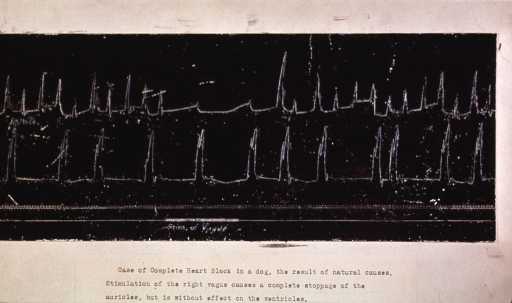<p>An early electrocardiograph showing a heart block in a dog.</p>