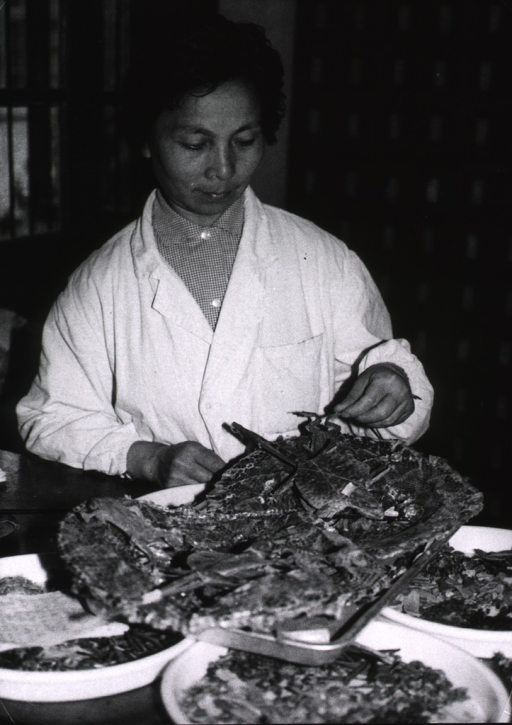 <p>A woman is standing at a table on which is a tray containing various dried frogs and lizards that are used to treat diseases of the respiratory tract.</p>
