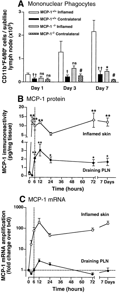 Rapid, sustained induction of MCP-1 in inflamed skin precipitates monocyte/macrophage accumulation in draining PLNs. (A) Time course of monocyte/macrophage recruitment to PLNs of wild-type and MCP-1−/− mice. CD11b+F4/80+ leukocytes were counted in subiliac PLNs at different times after intracutaneous injection of CFA/KLH into the ipsilateral flank. Monocyte numbers in the contralateral, noninflamed subiliac PLNs are shown for comparison. †P < 0.05; ††P < 0.01 vs. wild-type inflamed; *P < 0.01 MCP-1−/− vs. wild-type; #P < 0.05 vs. MCP-1−/− inflamed. n = 3–6 mice per group. (B) Time course of MCP-1 immunoreactivity in lysates of cutaneous sites of CFA/KLH injection (○) and the draining subiliac PLNs (•) measured by ELISA. *P < 0.05; **P < 0.01 vs. noninflamed tissue. n = 6. (C) Time course of MCP-1 mRNA expression in the CFA/KLH-inflamed subiliac PLN (•) and skin injection site (○). Fold change in MCP-1 mRNA levels over preinjection expression was measured in triplicate samples by real-time RT-PCR (TaqMan®) as described in Materials and Methods. Note that at 6 h (broken line in B and C), MCP-1 protein levels in draining PLNs were significantly increased above baseline, whereas mRNA levels were not. n = 3–6 mice per group. Symbols and bars represent mean ± SEM.