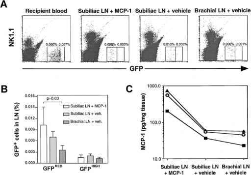 Intracutaneous injection of recombinant MCP-1 into MCP-1−/− mice enhances monocyte homing in draining PLNs. MCP-1−/− mice with cutaneous inflammation in both flanks and the right lateral chest were injected intracutaneously with recombinant murine MCP-1 (25 μg) over the left flank and vehicle (50 μl PBS) elsewhere, as described in Materials and Methods. 10 min later, 1.5 × 107 CX3CR1+/GFP donor PBMCs (containing ∼106 GFP+ cells) were injected intravenously. (A) FACS® plots show the frequency of GFP+NK1.1− monocytes after 90 min in recipient blood, the PLN draining MCP-1–injected skin (subiliac LN plus MCP-1), the contralateral subiliac LNs (subiliac LN plus vehicle), and the inflamed brachial LN (brachial LN plus vehicle) from the same mouse. 6 × 105 events are plotted in each histogram. (B) GFPMED, but not GFPHIGH CX3CR+/GFP cells accumulate preferentially in the subiliac LN that drained the MCP-1 injection site. Mean ± SEM of three separate experiments are shown. (C) MCP-1 protein concentration in inflamed left and right subiliac LNs and right brachial LNs 90 min after intracutaneous injection of recombinant murine MCP-1 or vehicle. Each curve reflects MCP-1 concentration in three PLNs measured in the same mouse.