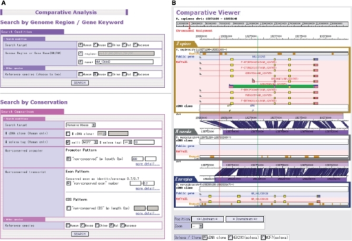 Screenshot from the search engine for the evolutionary conservation of the promoters and transcripts (A). The figure exemplifies the results of the search for promoters for which more than 10 Solexa sequences are associated, the alignable region in the promoters in human–mouse comparison is <300 bp and the overall base substitution of the downstream transcript region is <20% (B). The regions specified between red (one selection) and green (second selection) vertical lines (or one left click) can be magnified up to the sequence level.