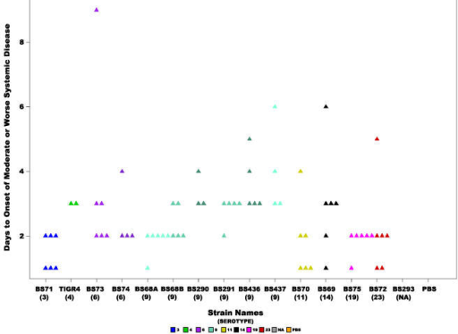 Rapidity of onset of moderate or worse systemic signs.Scatter plot showing the number of days it took for chinchillas inoculated with each of the S. pneumoniae strains to develop moderate or worse signs of systemic disease (score ≥2). Statistical analysis of all the strains revealed a significant difference (ANOVA p-value = 0.03 and Kruskal-Wallis p-value =  0.00118). Each triangle represents a single animal. Animals were not included that did not develop systemic disease before the end of the experiment. Colors represent different serotypes, and shades of the same color different strains of the same serotype or in the case of BS68(9) two cohorts from different experiments. NA: non applicable.
