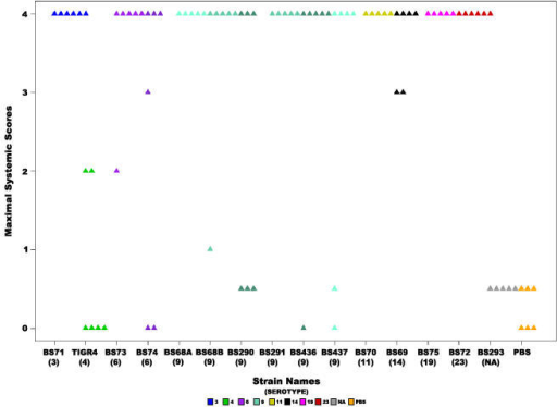Severity of systemic signs.Scatter plot illustrating the maximal systemic score for each animal inoculated with each of the S. pneumoniae strains, where each triangle represents a single animal. Statistical analysis of all the strains revealed a significant difference (ANOVA p-value = 2.69e−9 and Kruskal-Wallis p-value = 4.2−6). Colors represent different serotypes, and shades of the same color different strains of the same serotype or in the case of BS68(9) two cohorts from different experiments. NA: non applicable.