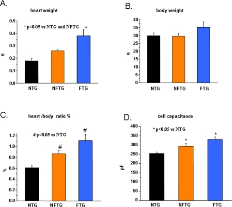 Development of cardiac hypertrophy and heart failure in Cav1.2α1C transgenic mice.(A) Measurement of heart weight, (B) body weight, (C) heart/body weight ratio and (D) size of myocytes estimated from cell capacitance in Non-Transgenic (NTG), Non-Failing Cav1.2α1C-Transgenic (NFTG) and Failing Cav1.2α1C-Transgenic (FTG) mouse groups (8–12 mo). n =  9 NTG, 4 NFTG and 4 FTG in (A,B and C) and 26 NTG, 12 NFTG and 31 FTG in (D).