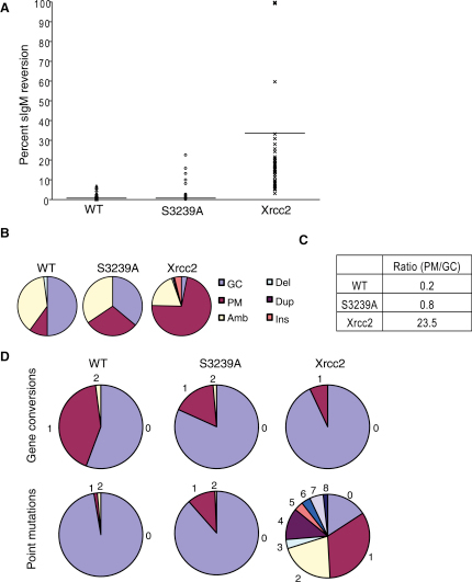 Immunoglobulin Gene Diversification in the Mutant Cell Line Brca2S3239A/S3239A Confirms the Integrity of Homologous DNA Recombination(A) Luria-Delbrück fluctuation analysis shows no significant difference in sIgM+ reversion to sIgM− status between the WT and S3239A cell lines. Xrcc2-deficient cells show a significant increase in median fluctuation relative to WT and S3239A (median percentage reversion indicated by horizontal line: WT 0.67%, S3239A 0.57%, Xrcc2 17.6%).(B) Pie charts showing that the source of mutation in VL1 is predominantly gene conversion in WT and Brca2S3239A/S3239A cells but predominantly point mutation in Xrcc2-deficient cells (n = 149, 148, and 54, respectively).(C) Table showing the ratio of point mutation to gene conversion suggests that commitment to homologous DNA recombination (HR) (gene conversion) is intact in Brca2S3239A/S3239A cells but has shifted to nontemplated error-prone repair pathways (point mutation) in Xrcc2-deficient cells.(D) Pie charts showing frequencies of unique gene conversion and point mutation events in WT and Brca2S3239A/S3239A cells indicate a preference for HR over the point mutation used extensively in Xrcc2-deficient cells.
