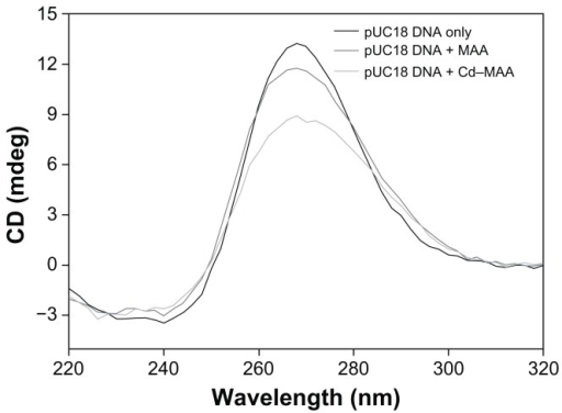 CD spectra of pUC18 DNA.Notes: The interactions of pUC18 DNA with MAA and Cd–MAA were at a ratio of compound:DNA = 0.4. All the spectra were recorded in Tris-HCl buffer, pH 7.0.Abbreviations: CD, circular dichroism; MAA, mercaptoacetic acid; Cd-MAA, cadmium-mercaptoacetic acid.