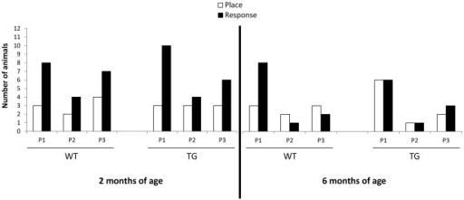Strategy shifting.Number of rats that exhibited Place (P) or Response (R) learning strategy during each Probe trial P1, P2 and P3 (days 8, 16 and 23 respectively) are represented for WT and TG cohorts of 2 and 6 months of age. The size corresponds to animals that made (1) correct arm choices with a learning index greater than 0.5 during each training session, and (2) were successful for the two last trials prior to the probe trials in the cross maze.