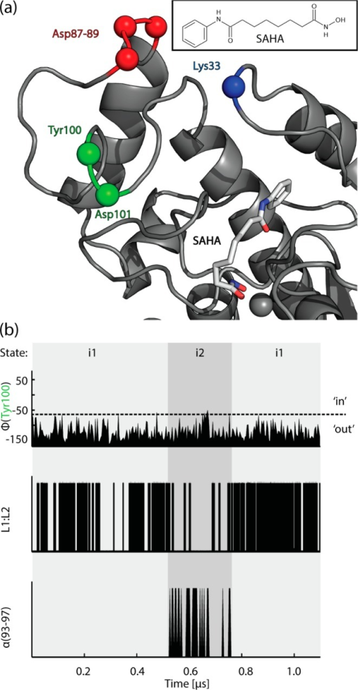 States of the L1 and L2 loop conformations when interacting withSAHA (chemical structure shown in the insert). (a): HDAC8:SAHA complexsnapshot of the simulation with SAHA (licorice) and HDAC8 (gray cartoon)where the binding rail is in its 'out' conformation.Positions of Lys33, Asp87–89, Tyr100, and Asp101 are illustratedwith colored spheres. (b): Microkinetic processes over the simulationtime as defined in Figure 2: (i) Φ angleof Tyr100, indicating binding-rail conformation; (ii) L1:L2 salt bridgepresence between Lys33 and Asp87–89; (iii) presence of an α-helixat residues 93–97.