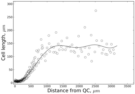 Experimental cell length distribution.Cell length distribution along the principal growth axis (distance from the QC/quiescent centre) determined for a typical 7-day-old Arabidopsis seedling root. Experimental set-up and growth conditions were in accordance with Beemster and Baskin [5]. The data points represent epidermal cell lengths. The 'polyloc method' was used for curve fitting (full line, cf.Methods).
