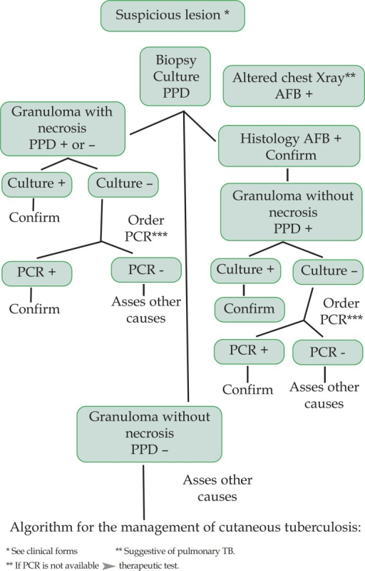 Algorithm for the management of cutaneous tuberculosis: