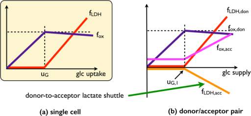 Qualitative behaviour of the single-cell and of the donor-acceptor system for the coarse-grained model.(a) In the cell-autonomous model, lactate overflow occurs when the glucose intake overcomes a threshold. Correspondingly, the flux through oxidative metabolism increases until the threshold before slowly decreasing once the crowding constraint is saturated and fermentation sets in. (b) In the donor/acceptor system, the donor behaves essentially as an autonomous cell and the acceptor adapts to it. For low glucose intakes, it operates oxidative pathways at small rate. When the donor saturates the crowding constraint excreting lactate, the acceptor imports it and uses it at a substrate to increase the flux through oxidative metabolism.