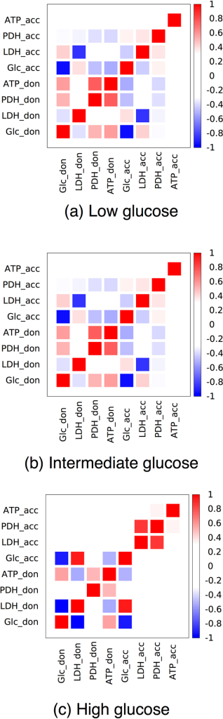 Restricted matrices of Pearson correlation coefficients for two coupled HCCN cells when the lactate donor maximizes the ATP production and the overall glucose supply is large shows that the two cells are not correlated.The intensity of the color represents the magnitude of the correlation coefficient (see scale on the right hand side). The two cells can independently access glucose and internal fluxes of the lactate acceptor and donor are essentially uncorrelated. The four representative reactions displayed for each cell are the glucose influx (Glc, a proxy for glycolytic activity), LDH (a proxy for lactate overflow and exchange), PDH (a proxy for oxidative metabolism) and the ATP production flux (ATP).