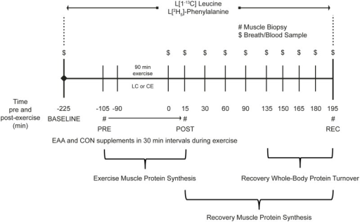 Experimental design.Load carriage (LC) and conventional endurance (CE) exercise muscle protein synthesis and whole-body protein turnover protocols.