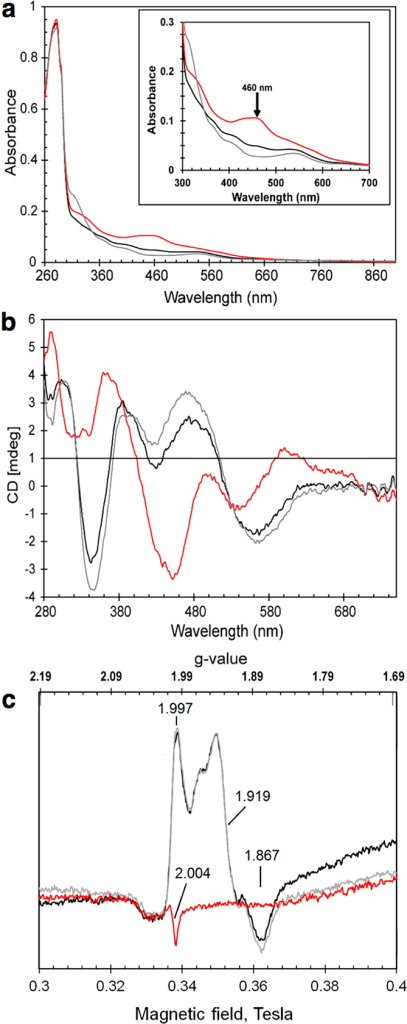 Spectroscopic characterization of RsrR.UV-visible absorption (a), CD (b) and EPR spectra (c) of 309 μM [2Fe-2S] RsrR (~75% cluster-loaded). Black lines – as isolated, red lines – oxidised, grey lines reduced proteins. In (a,b), initial exposure to ambient O2 for 30 min was followed by 309 μM sodium dithionite treatment; in (c) – as isolated protein was first anaerobically reduced by 309 μM sodium dithionite and then exposed to ambient O2 for 50 min. A 1 mm pathlength cuvette was used for optical measurements. Inset in (a) shows details of the iron-sulfur cluster absorbance in the 300–700 nm region.