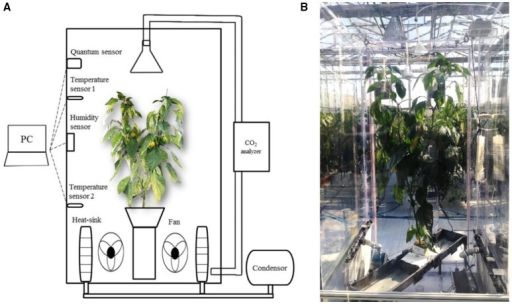 A schematic diagram (A), and actual installation (B) of a closed growth chamber for measuring CO2 consumption of paprika plant.