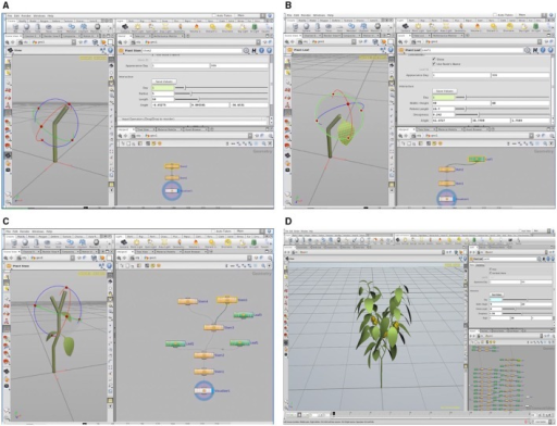 A 3D virtual plant constructed in the L-system using the Houdini FX graphic software: construction of paprika stem (A) and leaf (B), the process of modeling the paprika (C), and tree window of L-system formalism and graphic window of the completed paprika structure (D).