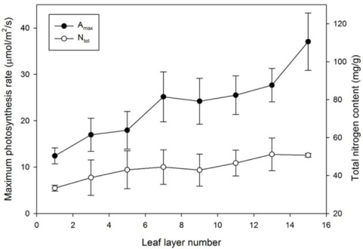 Maximum photosynthesis rate (Amax) and total nitrogen content (Ntot) by leaf layer number. Vertical bars represent the Mean ± SE (n = 5).