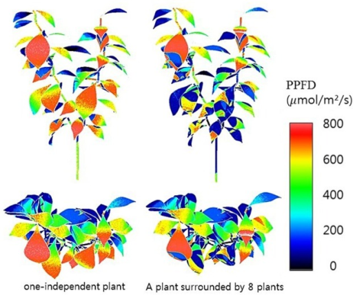 3D simulated results of intercepted irradiances of a single plant at 12:00 not surrounded (left) and surrounded (right) by eight plants.