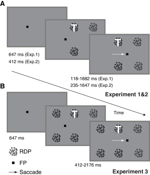 Task-design and timing.Human subjects performed a task that involved attending to a target (marked with a white T and always at the same location) presented as one among four (A) or six (B) moving RDPs while also making a visually guided saccade if the fixation point jumped seven degrees to the right (1235 ms after trial onset). The subjects were instructed to respond with a key-press when the target RDP briefly changed speed and direction, but to ignore similar changes in any of the remaining RDPs. Target and distractor changes occurred at different times around the saccade, enabling the measurement of peri-saccadic performance in this attention task. Two different task-difficulties were used in Experiment 2, while six RDPs were used in Experiment 3 instead of four. There were also minor differences in timing between the three tasks.DOI:http://dx.doi.org/10.7554/eLife.18009.003