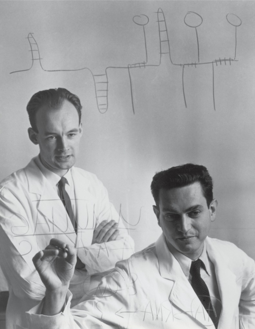 <p>Photograph of Heinrich Matthaei and Marshall W. Nirenberg. The photograph shows the two scientists working and is staged from a &quot;behind the blackboard&quot; perspective.</p>