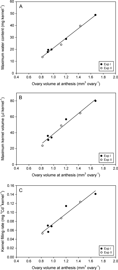 Association of maximum kernel water content (A; r2=0.99, P <0.001), maximum kernel volume (B; r2=0.97, P <0.001) and kernel-filling rate (C; r2=0.94, P <0.001) with ovary volume at anthesis for apical kernels of sorghum genotypes grown in two field experiments.