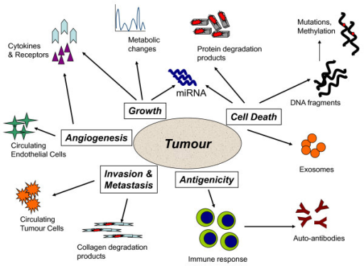 Tumour biomarkers in blood reflect the major processes resulting in tumour formation by cancer cells and the host reaction.