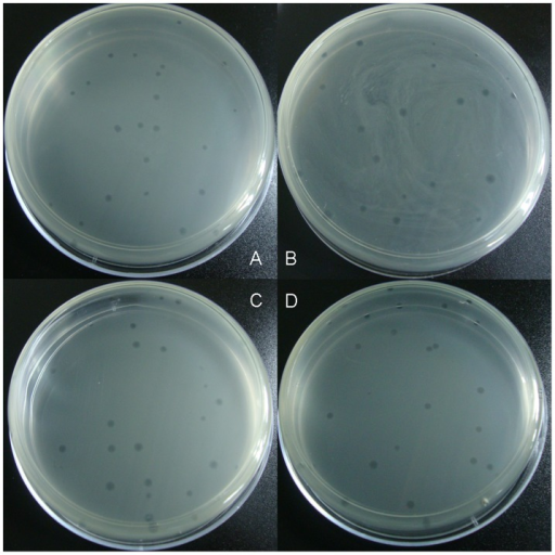 Images of the plaques (8 h, 37°C, 10 cm Petri dish).A. wt-S13 B. m1-S13 C. m2-S13 D. S13/G4 chimera.