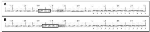 Overview of the 5'-flanking region of E. histolytica iscU (A) and iscS (B) encoding genes. The three typical upstream regulatory elements are depicted as by Purdy et al [23]; the putative initiator element, double underlined; the `GAAC'-element, grey box; and the putative TATA element, boxed.