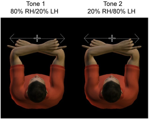 Experimental design. Subjects adopted a crossed hand posture, with the index fingers each at 10 cm distance from straight ahead. They had to fixate centrally, at a dim light between the two hands. Hands were resting on a tilted support, such that fixation was only slightly downward. Subjects had to saccade as fast and accurate as possible toward the tactile stimulus presented to the invisible fingertip. A tone cued with 80% validity the side of stimulation, such that subjects could anticipate the location of the sensory stimulus.