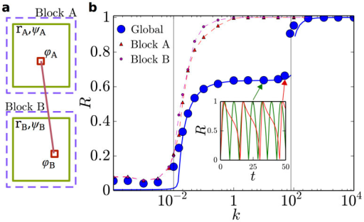 Two-block model.(a) Sketch of the two-block model. (b) Global order parameter for the two-block model with M = 128 and two interfacial nodes. Results of the numerical integration of the 258 Kuramoto equations (blue points) are in strikingly good agreement with the integration of Eqs.(2) (solid blue line). Local block-wise order parameters are shown for comparison (small symbols; dashed lines are guides to the eye). A first transition, where local order emerges, occurs at k ≈ 0.02, while global coherence is reached at k ≈ 90. In the intermediate region, R(t) oscillates (inset), revealing the lack of global coherence. Despite the simplicity of this toy model, these results constitute the essential building-block upon which further levels of complexity rely (see main text).