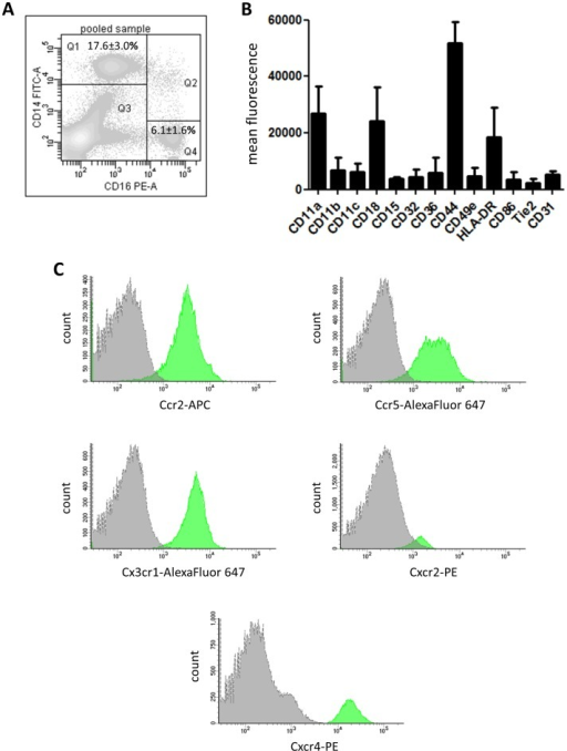 Characterization of CD14++CD16+ bone marrow monocytes by flow cytometry.(A) Representative contour plot of pooled BMC sample from three single donors showing a clear separation of two populations: CD14++CD16+ (Q1) and CD14−CD16++ (Q4). Gating was performed first in FSC/SSC dot plot following gating on CD45+ events in a SSC/CD45 dot plot. Finally, the expression of CD14 and CD16 was evaluated inside the CD45+ population. (B,C) Expression of monocyte-related antigens and representative histogram overlays with isotype control (gray filled) of crucial chemokine receptors on CD14++CD16+ BMCs as analyzed by flow cytometry. Data are from 3 to 6 individual donors.
