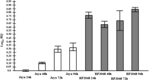 Expression of OoDAD1 in the Asian rice gall midge. Relative expression evaluated in midges feeding on susceptible [Jaya (white bars)] and resistant [RP2068 (shaded bars)] rice varieties determined using Quantitative Real-Time PCR. The time points mentioned are 24, 48, 72 and 96hai. RQ values describe the relative expression values of transcripts with reference to expression level of OoDAD1 in maggots feeding on Jaya variety (24hai). Error bars represent mean ± SD